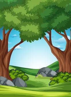 森の自然の風景