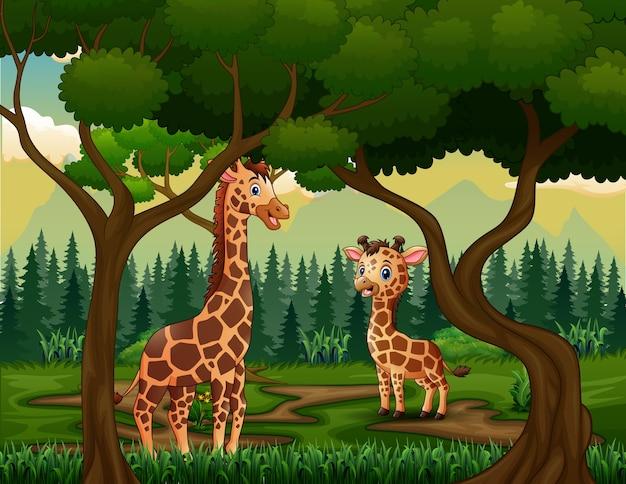 Жираф с детенышем в тропическом лесу