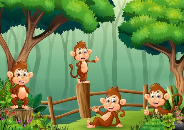 나무 울타리 안에 원숭이의 그룹