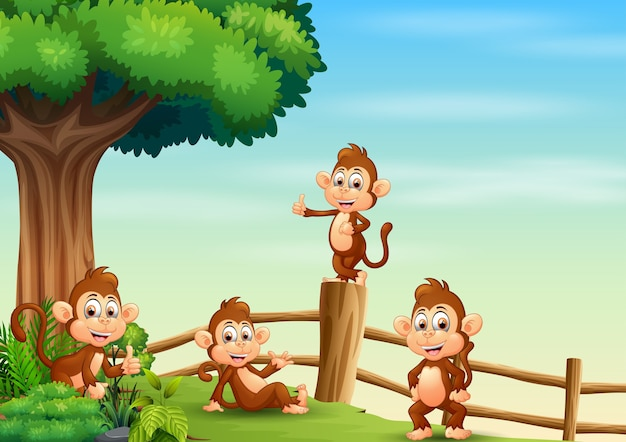 나무 울타리 안에 원숭이 그룹