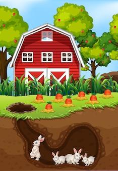 지하에 사는 토끼 그룹