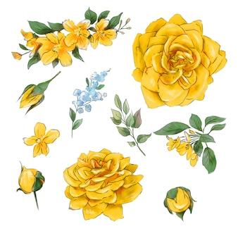 水彩画の柔らかい入札バラの大規模なセットは超品質。