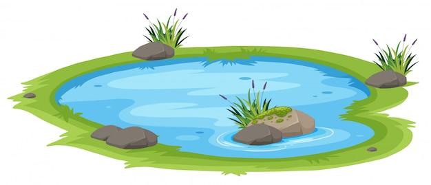 흰색 배경에 자연 연못