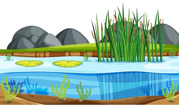 自然の池の風景