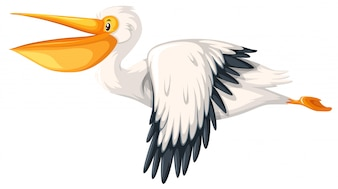 A pelican flying on white background