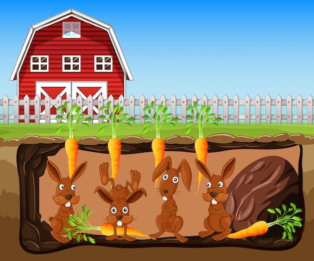 당근 농장에서 토끼 구멍