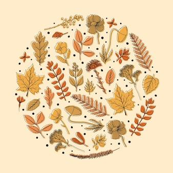 植物標本室のための乾燥した葉と花の丸いフレーム。線画