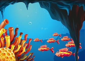 洞窟内のサンゴ礁に行く魚群
