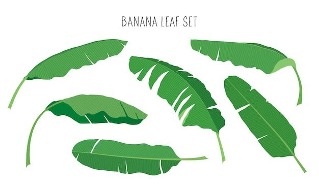 バナナの葉のセット。フラットスタイルのベクトルイラスト。白い背景で隔離。デザイン、バナー、ポスター、背景