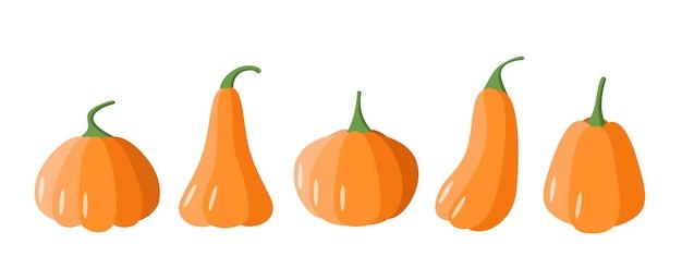 Набор мультяшных тыкв. тыквы различной формы, векторные иллюстрации осеннего урожая овощей.