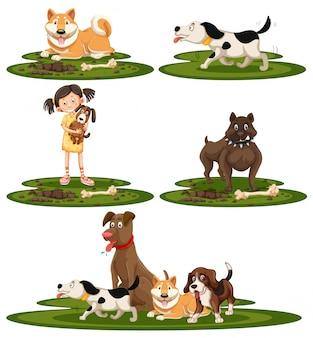 犬の品種のセット