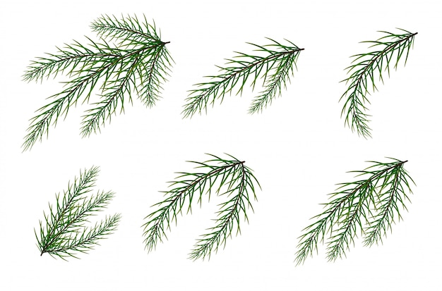 モミの枝のセット。クリスマスツリー。