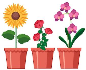 A Set of Flower in Pot