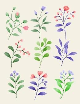 さまざまなカードやグリーティングカードに添えるために水彩で描かれた花のセット。