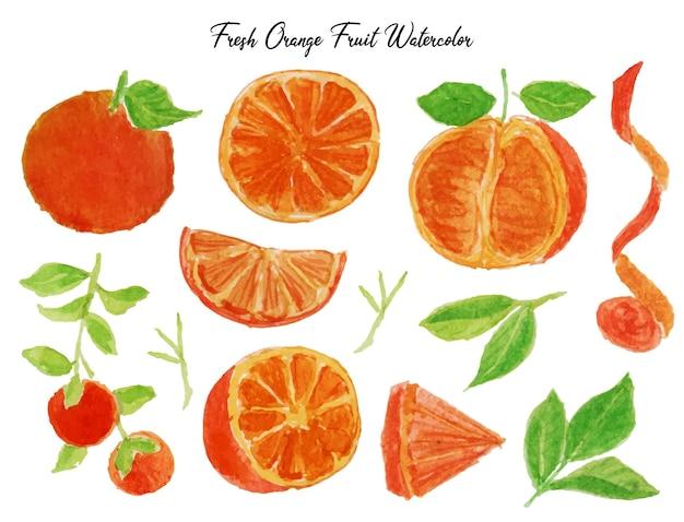 新鮮なオレンジ色の果物と葉の水彩画のセット