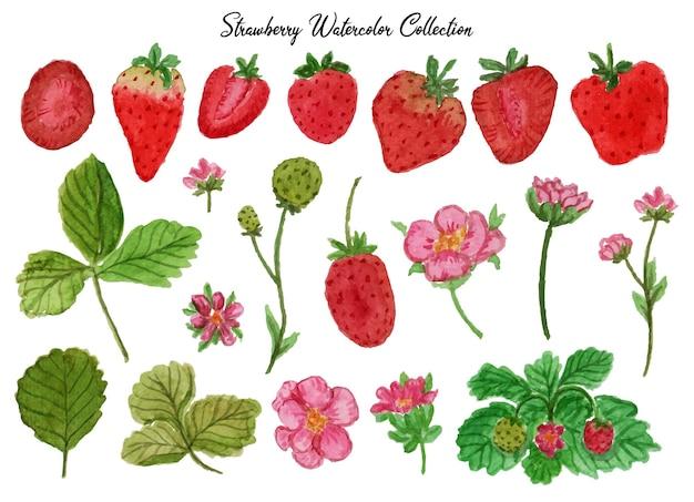 신선한 딸기 수채화 세트