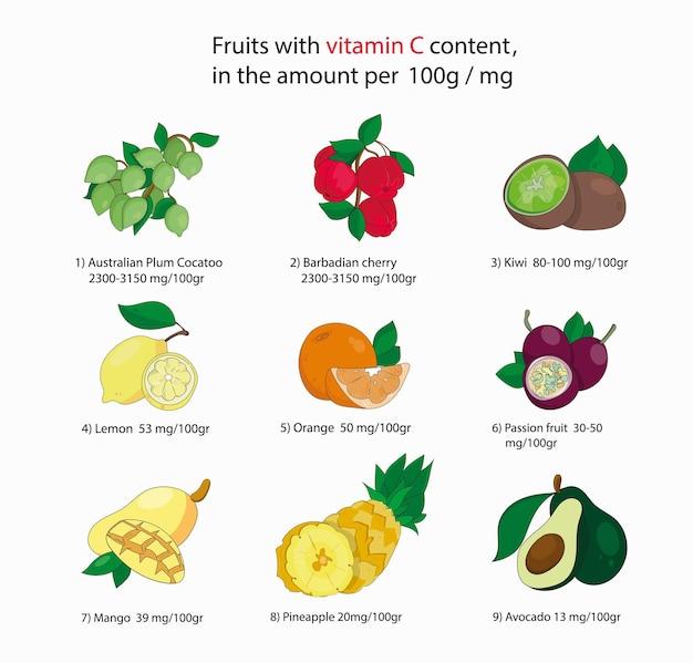 Набор фруктов, содержащих наибольшее количество витамина с. инфографика.