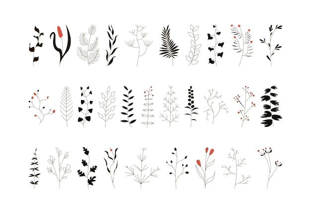 葉と花と優雅な小枝のセット