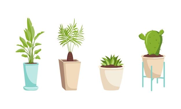 냄비와 나무 스탠드에 실내 식물 세트. 바나나, 대추 야자, 선인장 및 다육 식물의 녹색 잎. 나는