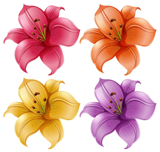 Набор цветов лилии