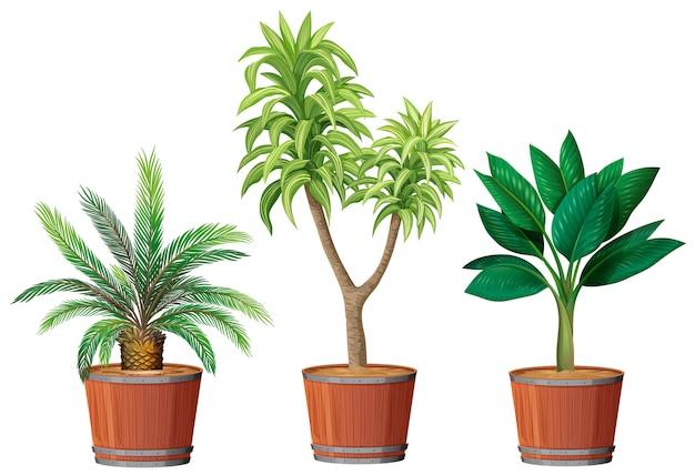 ポットの植物のセット Premiumベクター