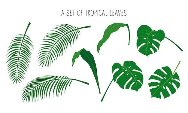 熱帯の葉のセット。フラットスタイルのベクトルイラスト。白い背景で隔離。デザイン、バナー、ポスター、背景