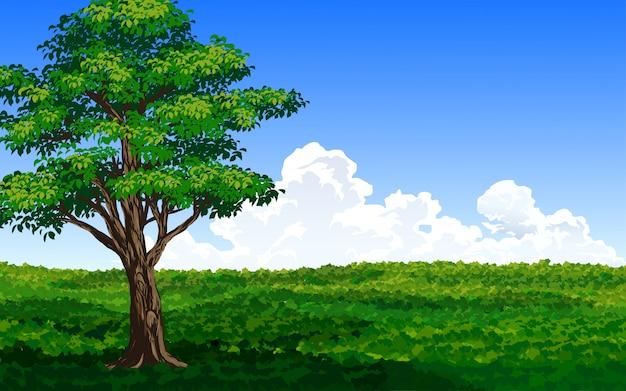그린 필드의 나무