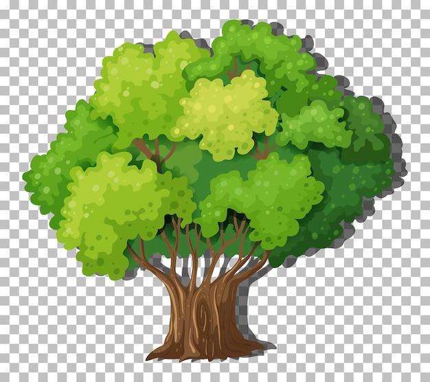 透明な背景に分離された木