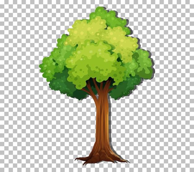 Дерево, изолированные на прозрачном фоне
