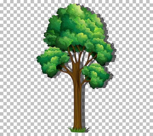 투명한 배경에 녹색 잎이 있는 나무