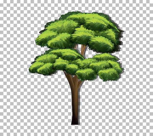 透明な背景に緑の葉を持つ木