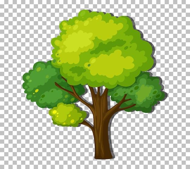Дерево с зелеными листьями на прозрачном фоне