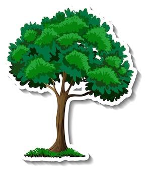 Дерево с наклейкой зеленые листья на белом фоне