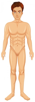 A Vector of Man Body
