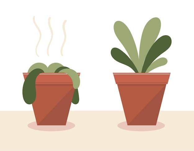 화분에 시든 식물이 물을 주고 돌보기 전과 후에 식물이 살아났습니다