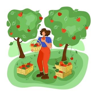 リンゴを収穫する女性。フラットスタイル。農業、孤立した背景での農業。