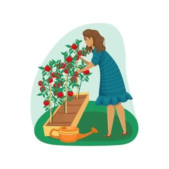 한 여자가 정원에서 토마토를 돌본다. 심기, 재배 야채. 정원 관리. 농업, 농업.