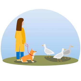 犬を散歩している女性。幸せなかわいい犬。ウェールズコーギー。子犬が座っていると野生のアヒルを見て