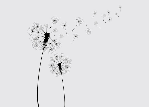 Abstract background of a dandelion for design the wind blows the seeds of a dandelion