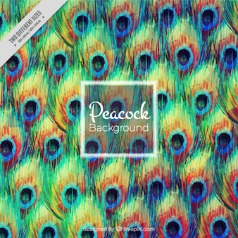 Abstract sfondo di pavone