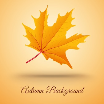 Abstract background with autumn leaf