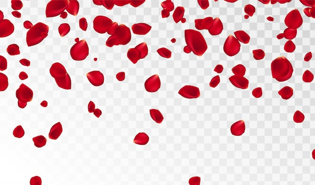 Abstract background with flying red rose petals isolated. vector illustration. rose petals vector illustration.