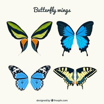 초록 나비 날개