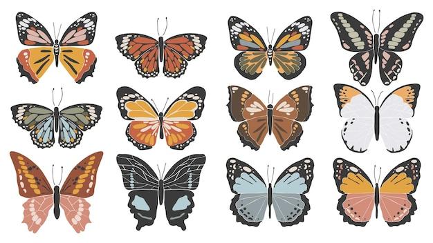 추상 화려한 나비 세트