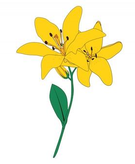 抽象的な手描きのリリーの花。図