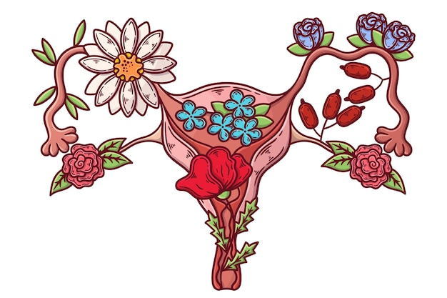 Abstract illustration of female reproductive system concept