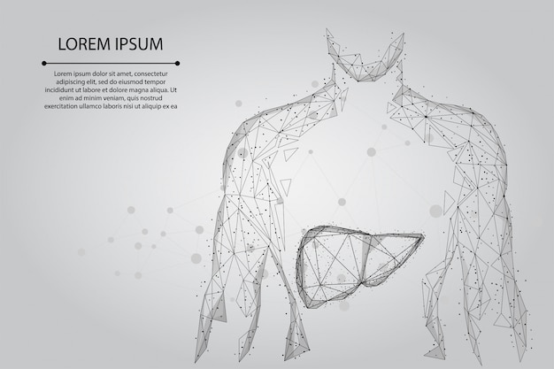 Abstract line and point human body with the liver. healthcare, science and technology