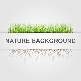 Abstract nature background.