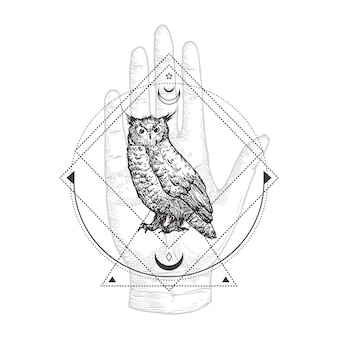 Premium Vector Gorgeous Owl Coloring Page In Exquisite Style