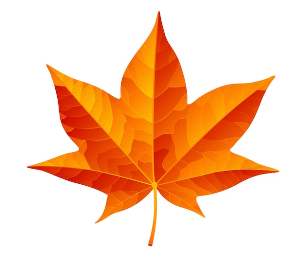 Abstract orange autumn leaf isolated on white background. rgb. global colors